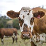 2Woolworths将永久上调牛奶价格承诺会一直为奶农提供额外资金22-768×576